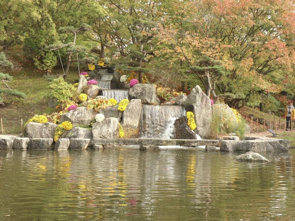 Chrysantheme Jardin En Hesbaye